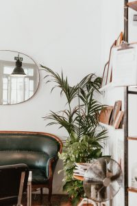 A corner of a room featuring a large palm plant next to an antique settee.